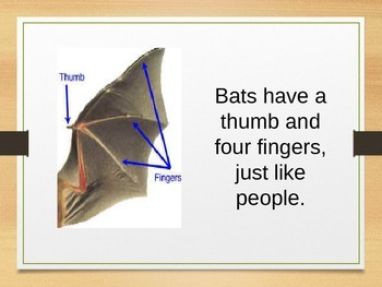 Bats...Are they an animal or a bird?