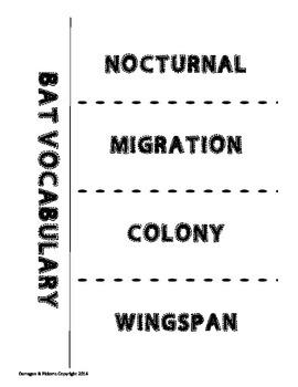 Batty Vocabulary