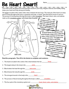 The Circulatory System: The Heart