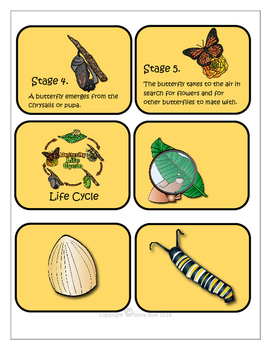 STEM - Be a Butterfly Detective - Life Cycle, Biomimicry, Inspiration for Ideas