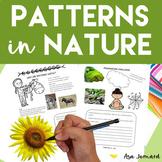 Pattern in Nature - STEAM - Flash