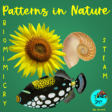 Pattern in Nature - Project based learning, NGSS, Biomimic