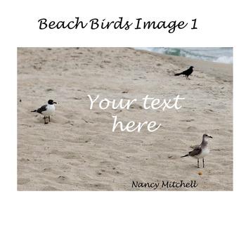 Beach Birds Image 1