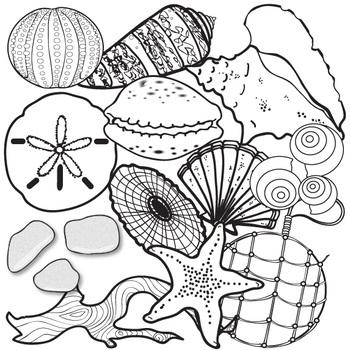 Beach Finds and Seashells Clip Art