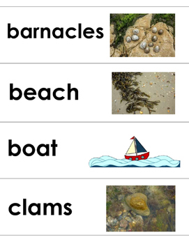Beach Tidepools Ocean Literacy and Science Word Wall