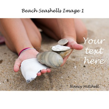 Beach Seashells Image 1
