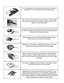 Beak Lab - Adaptations, ecosystems, habitat