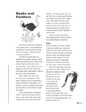 Beaks and Feathers (Lexile 960)