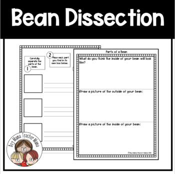 Bean Dissection Observations and Findings Sheet
