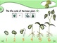 Bean Experiment - Animated Step-by-Step Science Project - PCS