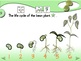 Bean Experiment - Animated Step-by-Step Science Project - SymbolStix