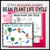 Bean Life Cycle Diagram   Printable & Digital