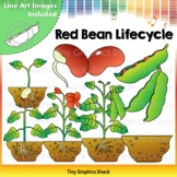 Bean Lifecycle Clip Art