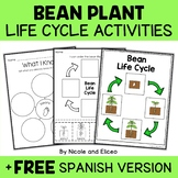 Vocabulary Activity - Bean Plant Life Cycle