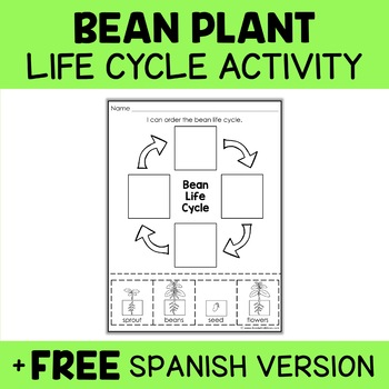 Bean Plant Life Cycle Activity
