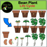 Bean Plant Life Cycle Clip Art