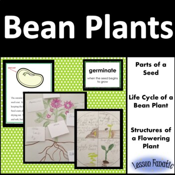 Bean Plant: Seed Parts, Life Cycle of a Bean Plant, Flowering Plant Structures
