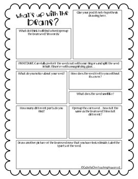 Bean Seed Exploration Sheet
