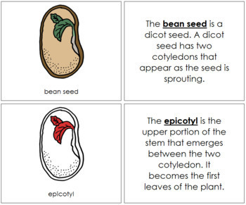 Bean Seed Nomenclature Book (Red)