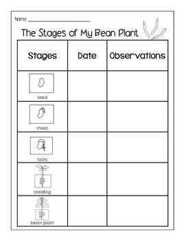 Bean & Sunflower Plant Observation Sheets