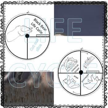 American Black Bear (Life Cycle Spinner)