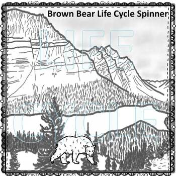 Brown Bear (Life Cycle Spinner)