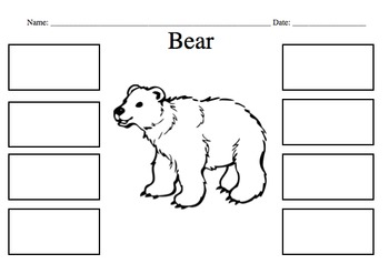 Bear Diagram and Labels