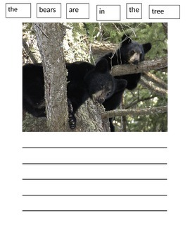 Bear Paper Writing Wall