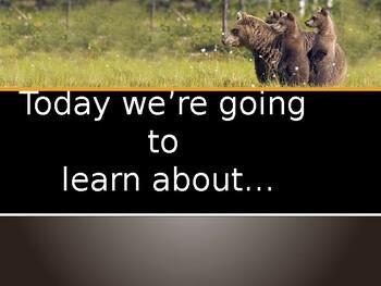 Bear Powerpoint! Black, Brown, Grizzly, Polar, Sun, Panda, Koala