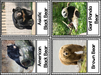 Bear Research for Kinder