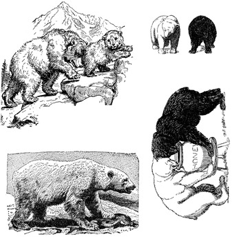 Bear clipart 2
