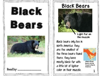 Bear -y Fun Facts {An Informative ELA Opinion Writing Unit About Bears}