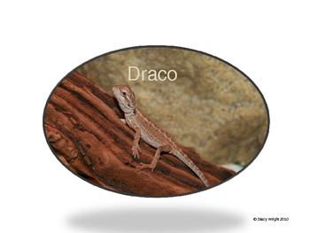 Bearded Dragon Class Pet