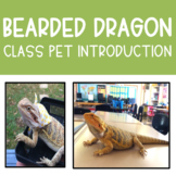 Bearded Dragon Class Pet Introduction