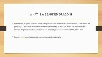 Bearded Dragon PowerPoint