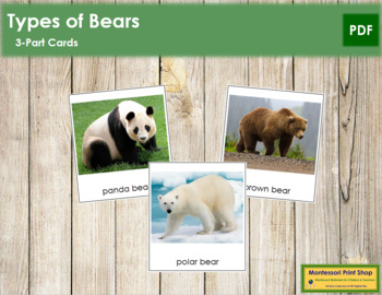 Bears: 3-Part Cards