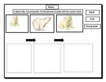Bears: Kindergarten. ESL