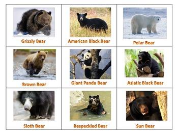 Bears Letter Bb Unit