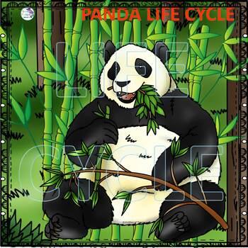 Bears Life Cycle Spinner Bundle
