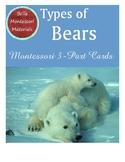 Bears - Montessori 3-Part Cards