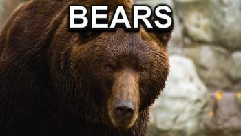 Bears - PowerPoint