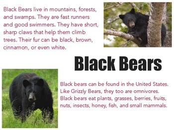 Bears Slideshow