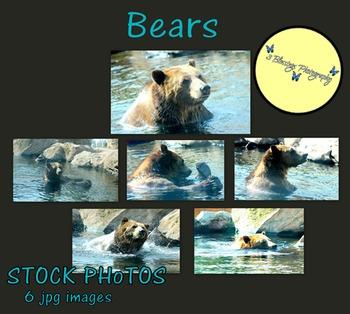 Bears - Stock Photos - Photo Pack Bundle - Zoo Animals