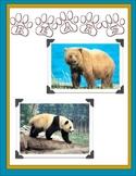 Bears Theme Unit