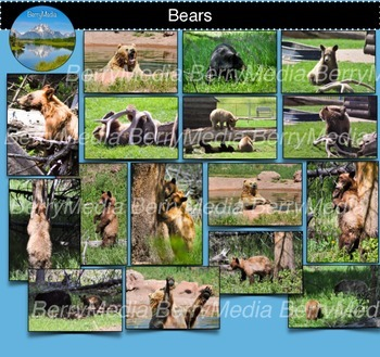 Bears Images, Wildlife Photos, Grizzly Bear
