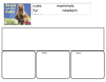 Bears and Their Cubs Main Idea