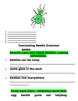 Beautiful Beetles Science Packet