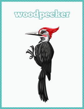 Beautiful Birds Flash Cards; Kindergarten; Preschool; Homeschool; Nature;