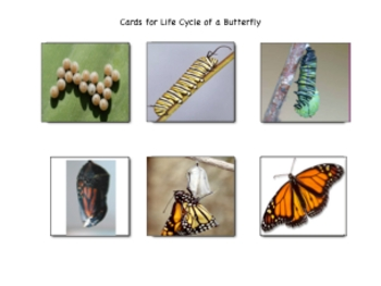 Beautiful Butterflies Science Literacy Bag Download