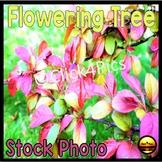 Stock Photo: Pink Flowering Spring Tree